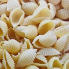 Conchiglie rigate nature - Pâtes fraîches