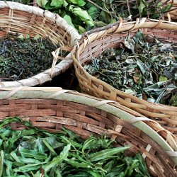 Plantes aromatiques du massif vosgien issues de l'Agriculture Biologique