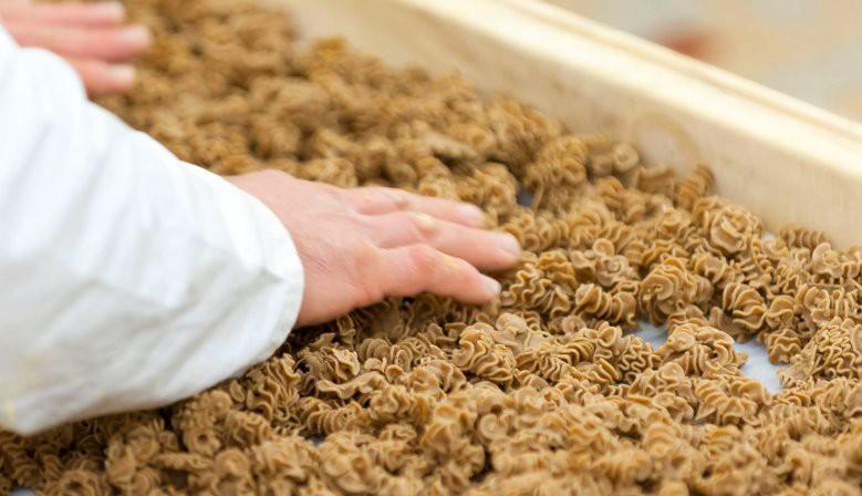 Découvrez notre gamme de pâtes aux insectes hyperprotéinées
