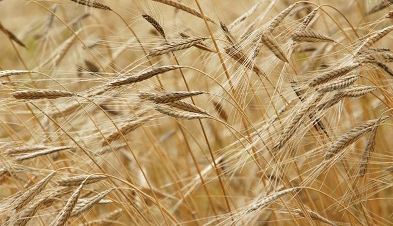 Goutez à nos pâtes BIO au petit épeautre 100% issu de l'agriculture biologique, pâtes à faible teneur en gluten